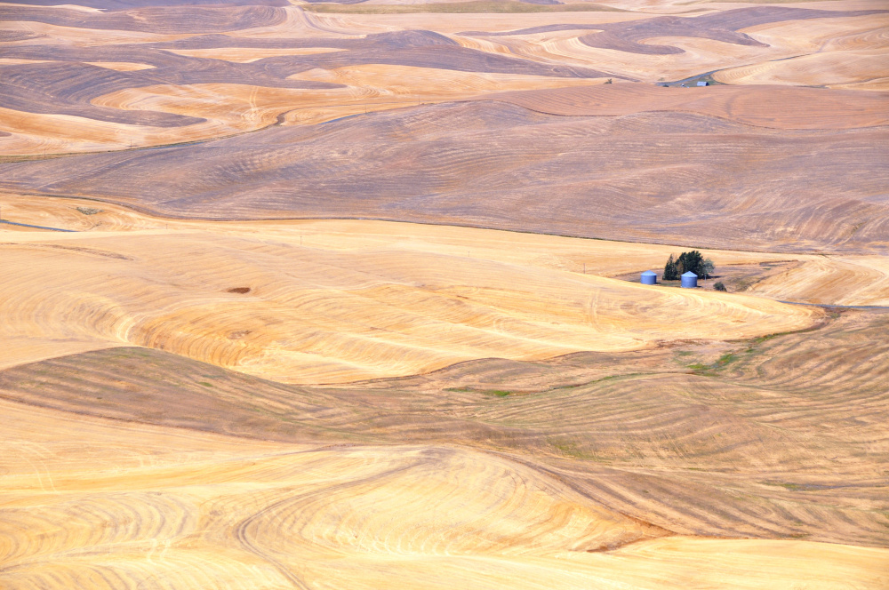 26 Getreide DSC_3596
