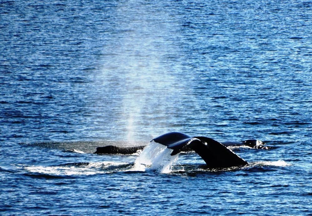 6-Wale DSC_2206