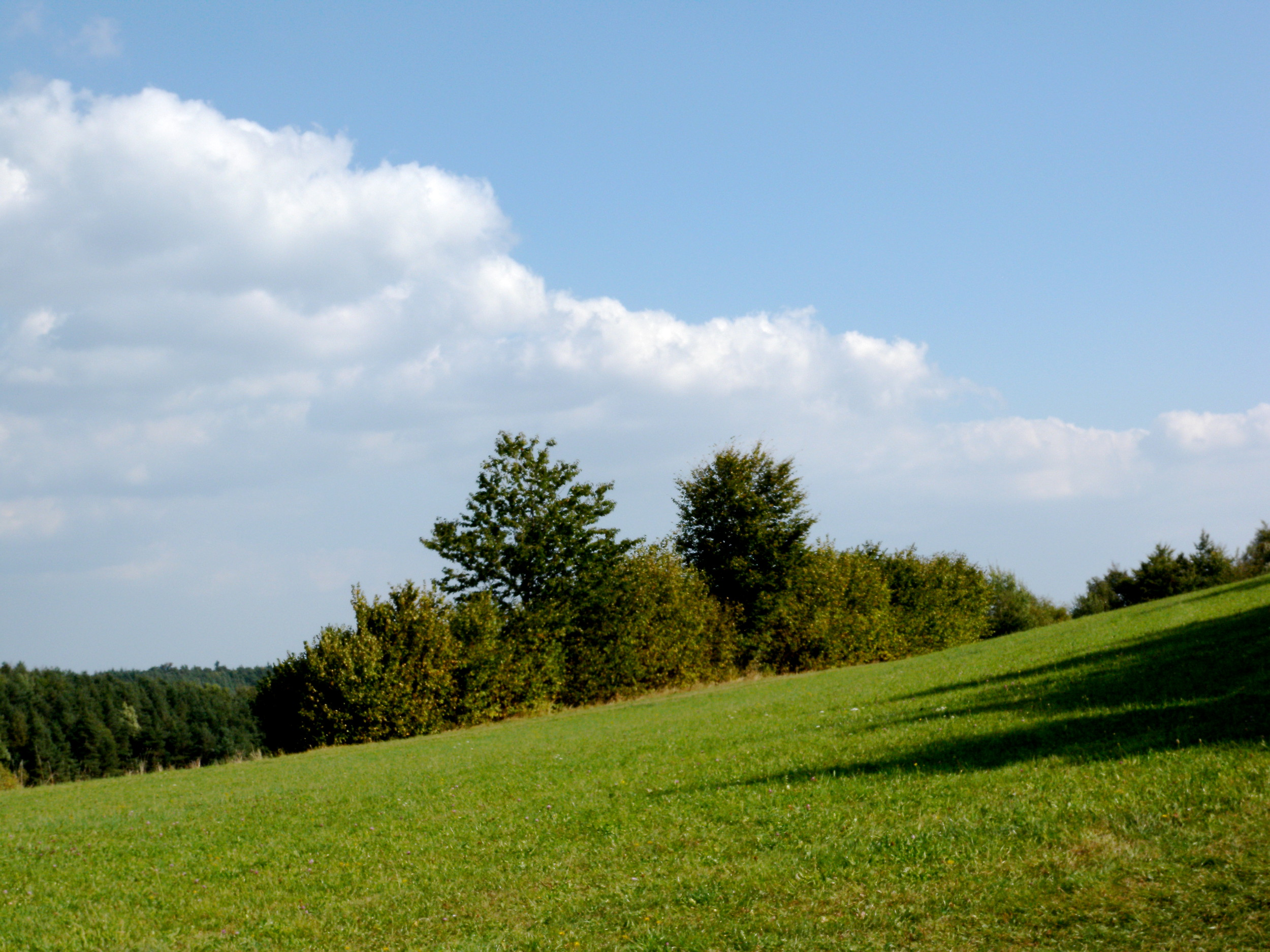 Waldviertel 1