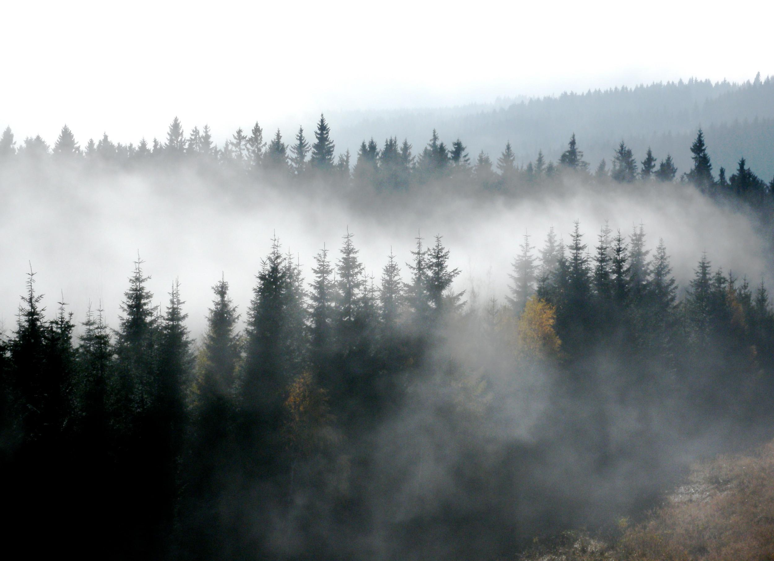 Waldviertel Morgennebel 3