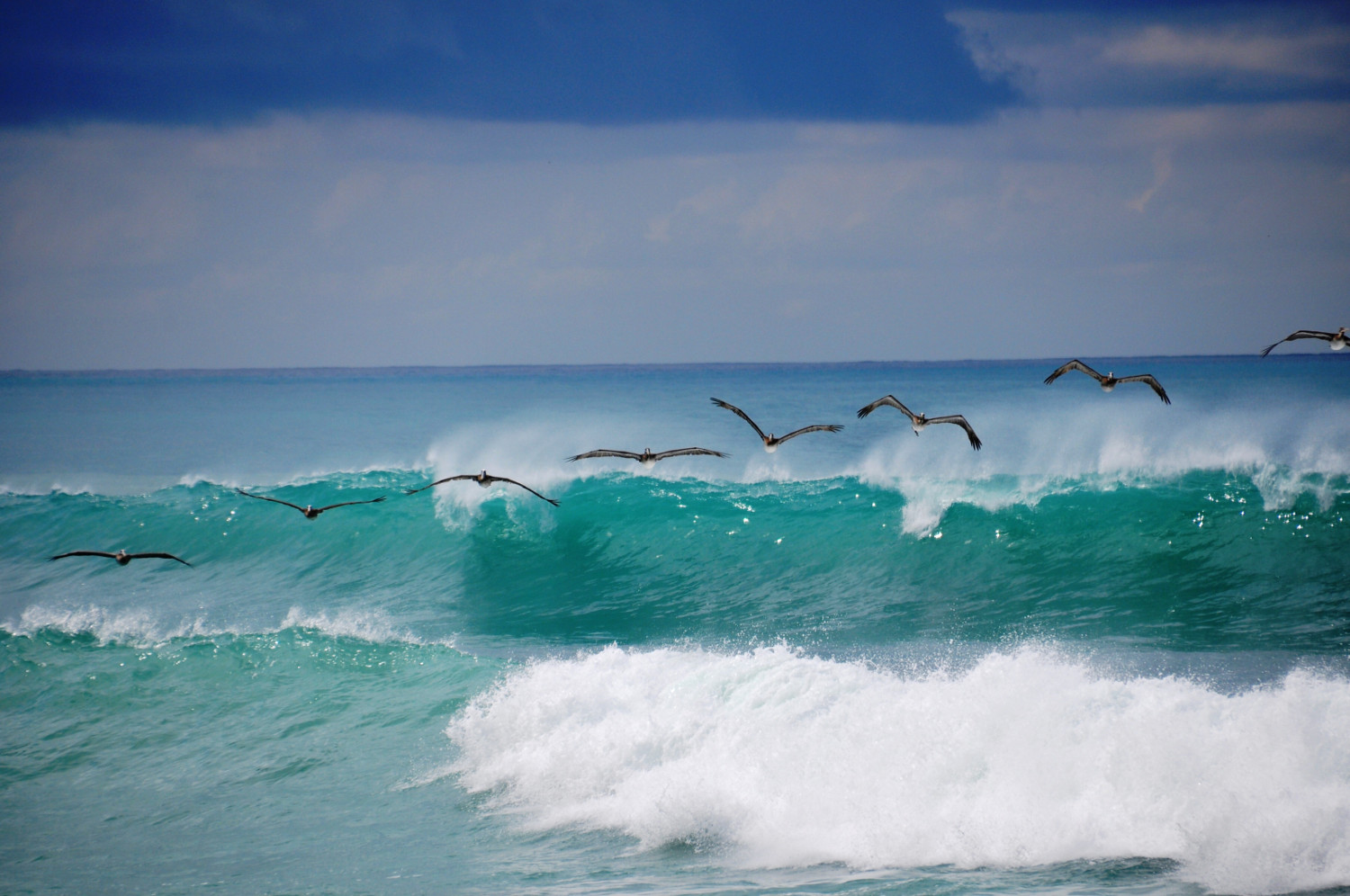 Pelikanformation über türkisen Pazifikwellen | Pelicans flying in formation above the turquoise Pacific waves