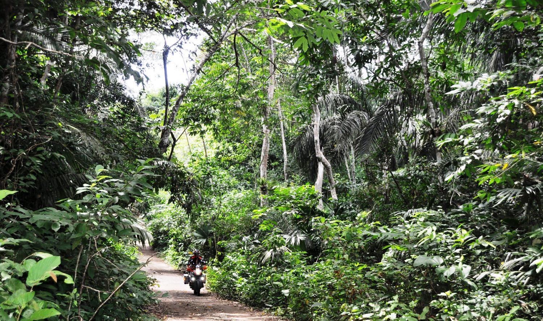 Regenwald entlang des 80 Kilometer langen Panamakanals   Rain forest along the 80 kilometers of the Panama Canal