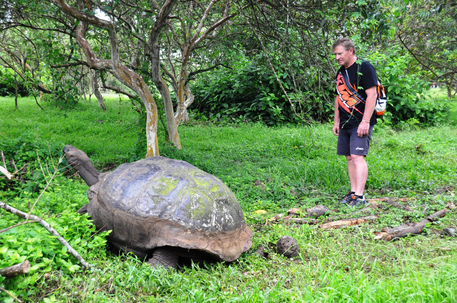 Die Galapagos Riesenschildkröte trägt ihren Namen zurecht | The giant tortoises of Galápagos certainly live up to their name