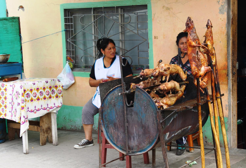 Cuj: Meerschweinchen vom Grill ist im Süden Kolumbiens ein beliebtes Essen | Cuj: roasted guinea pig is a popular dish in the south of Colombia
