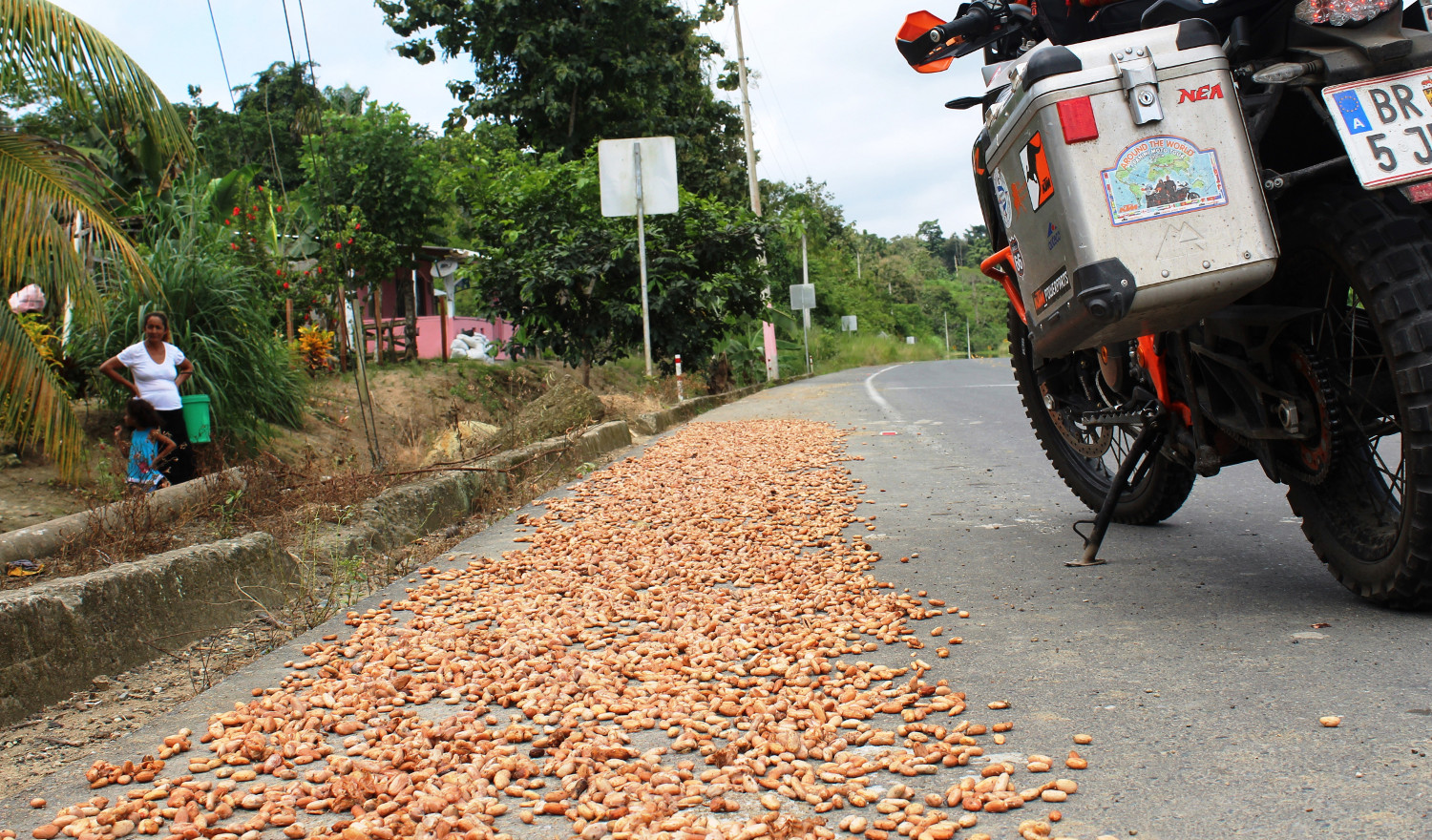 Kakao wird auch am Straßenrand zum Trocknen ausgelegt | Cocoa is even laid out by the side of the road to dry