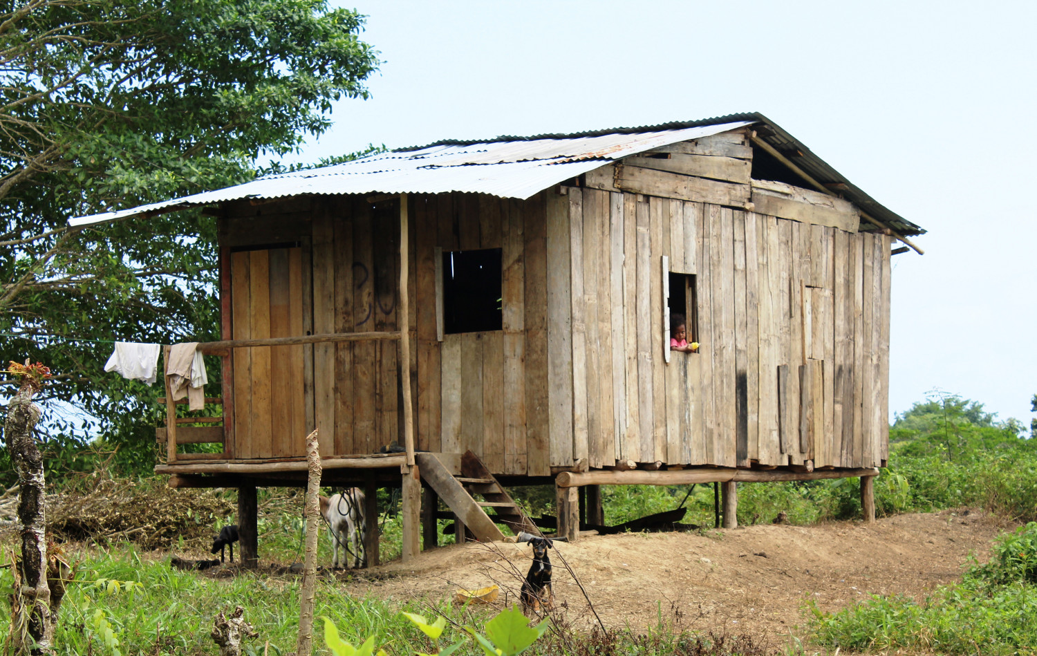 Holzhütte: die Durchschnittsbehausung der meisten Bewohner im tropischen Ecuador | Wooden hut: the type of housing inhabited by most people in tropical Ecuador