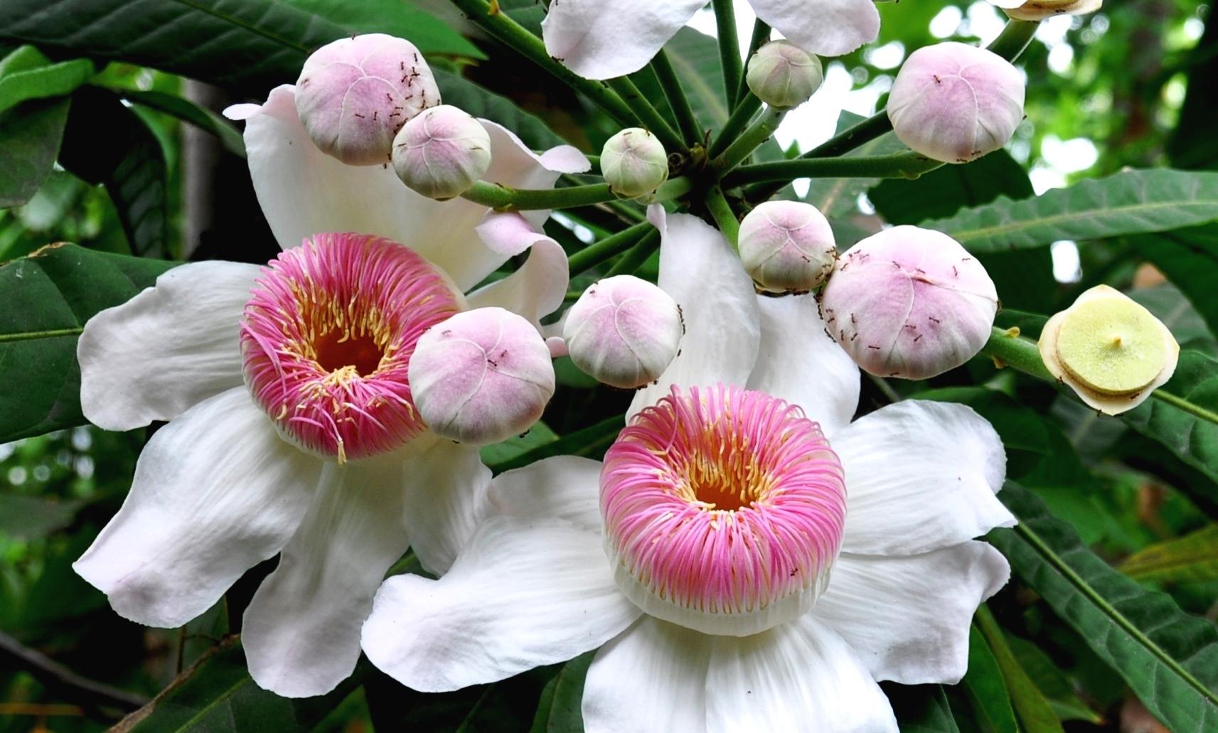 Blütenzauber – Zauberblüten? | A magical floral sight