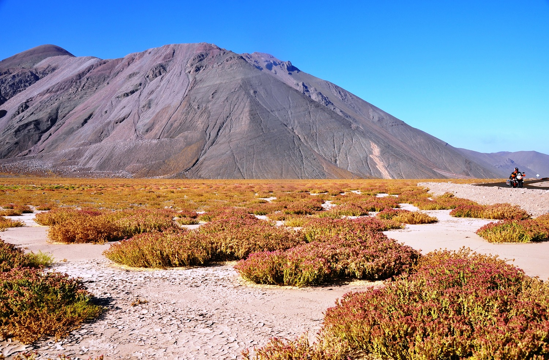 Hinter Copiapó blüht die Wüste | Behind Copiapó, the desert blooms
