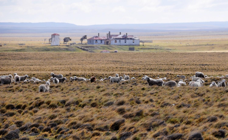 Sehr viel mehr Schafe als Menschen | Loads more sheep than people