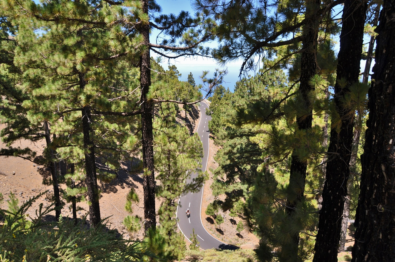 Pinienwald auf La Palma | Pine forest on La Palma