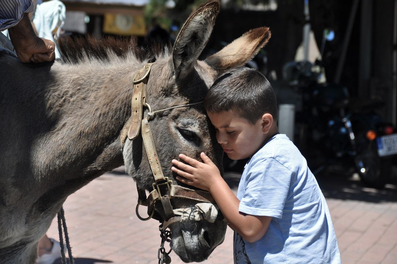 Kuschelig, so ein Eselchen | Cuddly little donkey