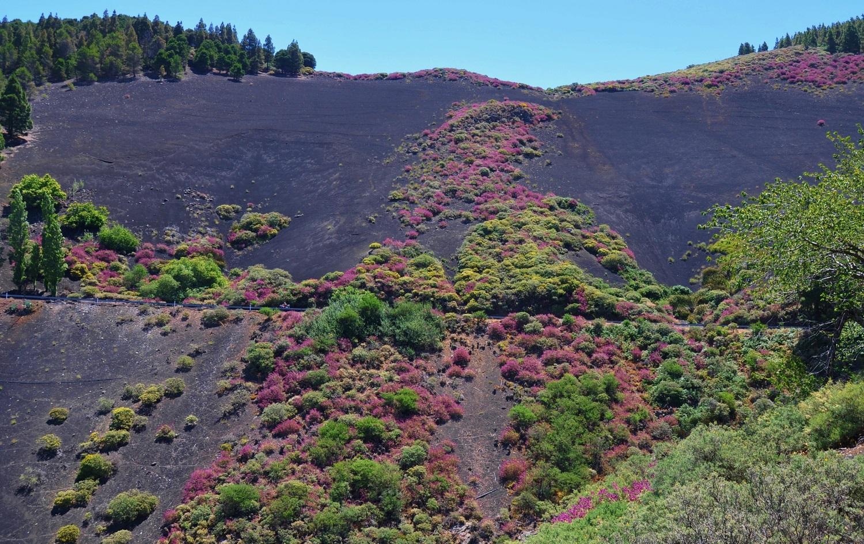 Gran Canaria trägt pink | Gran Canaria wears pink