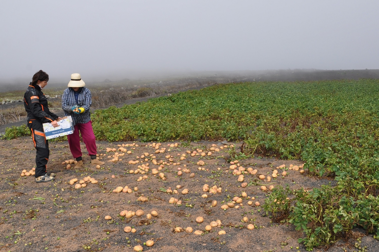 Mithelfen bei der Kartoffelernte | Helping with the potato harvest