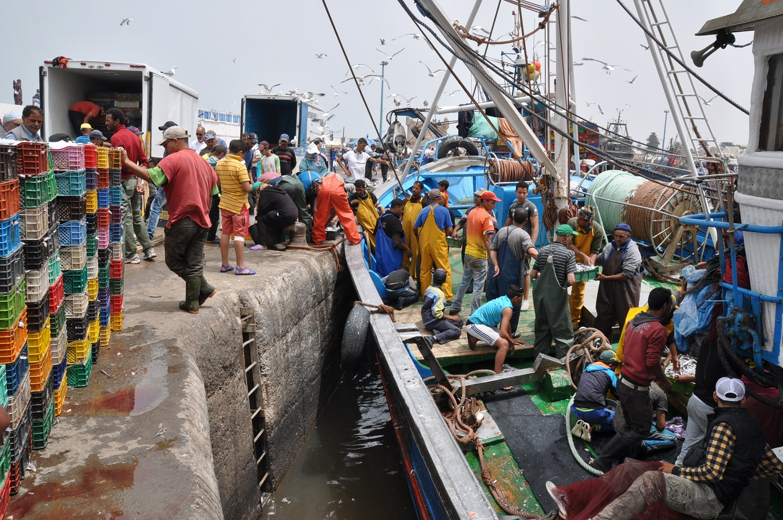 Teamwork: ein Sardinenboot wird entladen | Teamwork: unloading a sardine boat