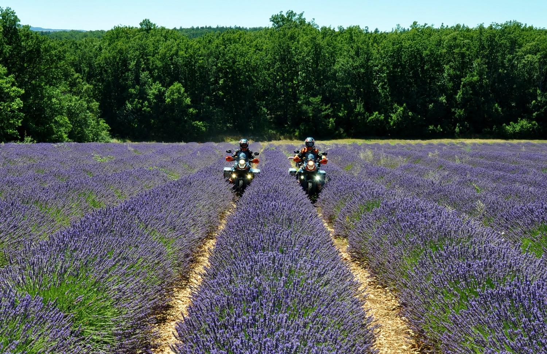 Lavendelfeld in der Provence | Lavender field in Provence